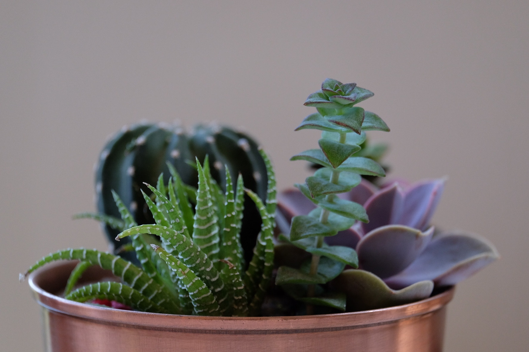 How To Care For Your Office Plants